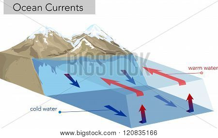 vector illustration of a Vertical Ocean Currents. cold and warm