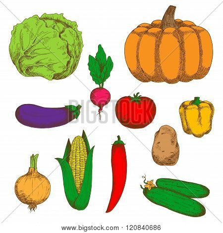 Farm vegetables color retro sketches