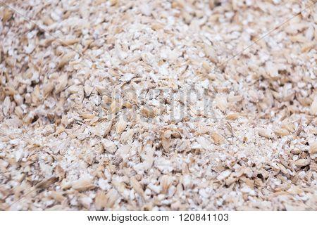Malt Seeds Milled In Close-up