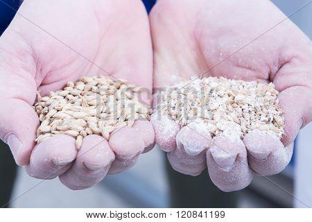 Man Holding Handful Of Malt Seeds
