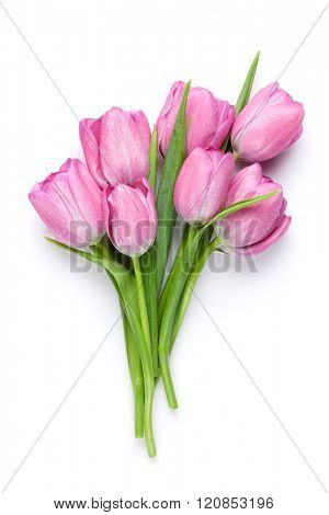 Fresh pink tulip flowers bouquet. Isolated on white background