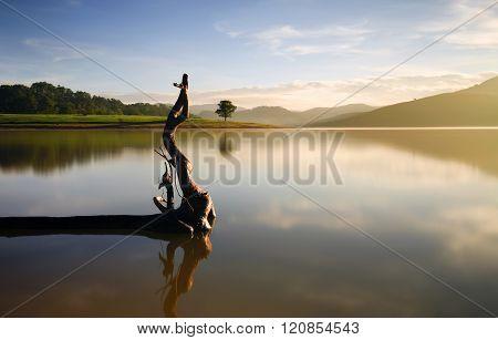 Alone tree in lake in sunny day