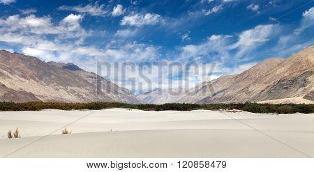 Dunes In Nubra Valley - Ladakh - Jammu And Kashmir