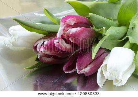 Bouquet From Red And White Tulip