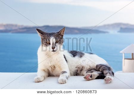 Cat lying on stone wall in Oia town, Santorini, Greece. Aegean sea and Caldera behind
