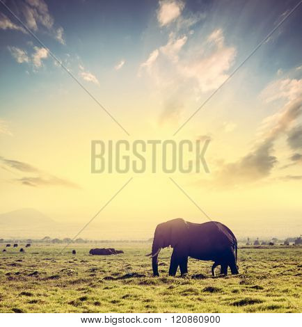 Elephant on African savanna at sunset. Safari in Amboseli, Kenya, Africa. Dramatic sky.