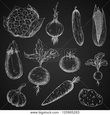 Fresh organic vegetables sketches set