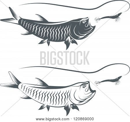 Tarpon Fish And Lure Template Vector Illustration