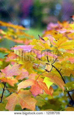 Fall Season Colors