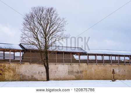 Fortress wall and tree in winter scene