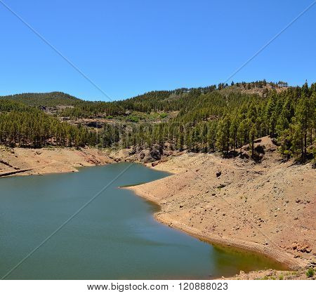 Water dam amidst pine forest
