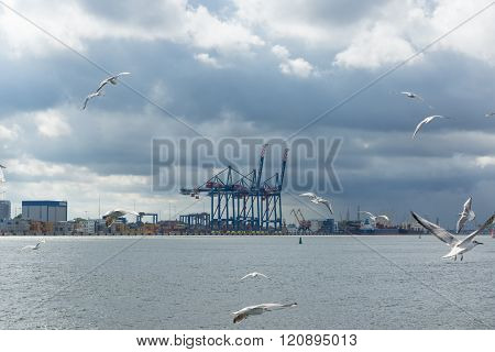 The Seaport With Crane