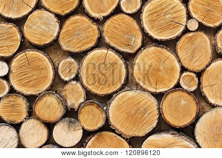 Background Of Wooden Logs Sawn Across