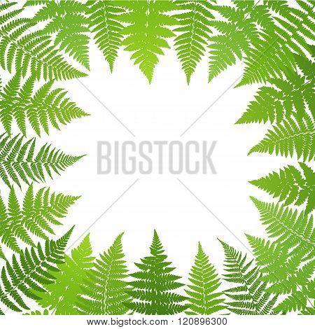 Jungle poster. Fern frond background. Vector illustration