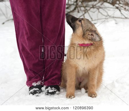 Red Fluffy Mongrel Puppy Sitting On Snow