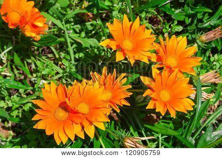 Flowers In Alpine Meadow.