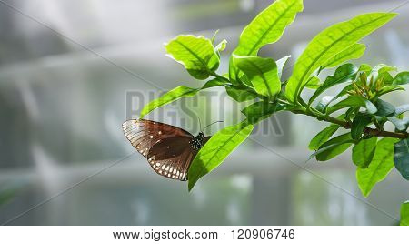 Butterfly In The Foliage.