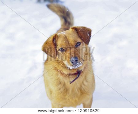 brown shaggy dog standing on the white snow at the winter