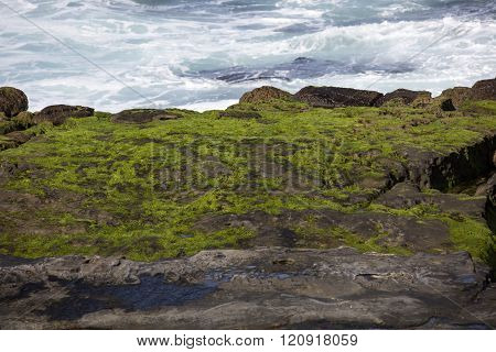 Moss On Coastal Rocks