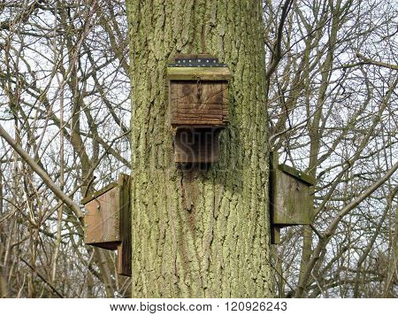 Bat Boxes On Tree