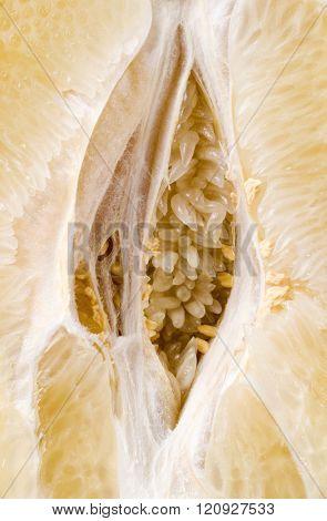 Citrus fruit core closeup background.