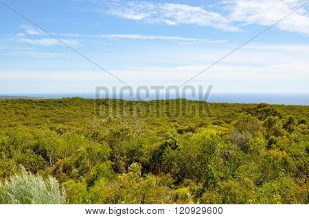 Tree Tops Overlooking the Ocean