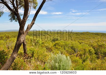 Scenic View: Boranup Forest, Western Australia