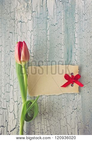 Single Fresh Tulip And Paper Tag
