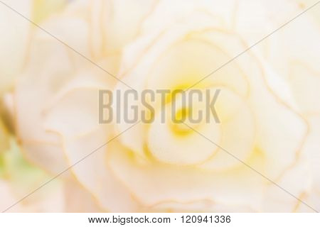 Abstract Blurred Background Flower Shape Pastel And Cream Colour