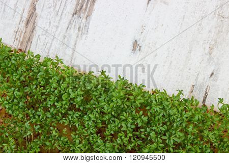 Fresh cress on old rustic wooden background, decoration for Easter, healthy nutrition, copy space fo