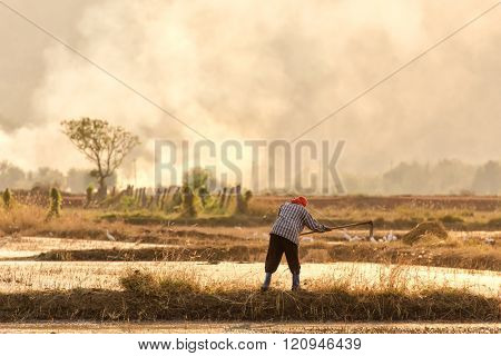 Thai farmer ploughing a rice field at sunset in the Kanchanaburi province, Thailand