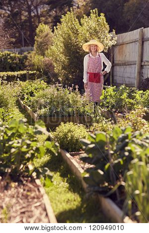 Urban food garden with senior woman standing proudly