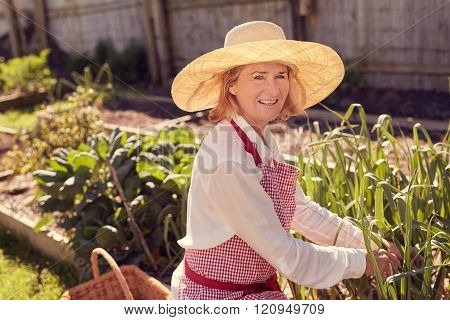Portrait of senior woman checking plants in vegetable garden