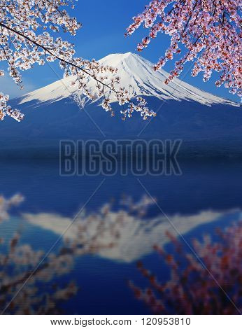 Mt.Fuji with Cherry Blossom with water reflection at Lake Yamanaka, Yamanashi, Japan