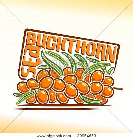 Vector illustration on the theme of sea buckthorn
