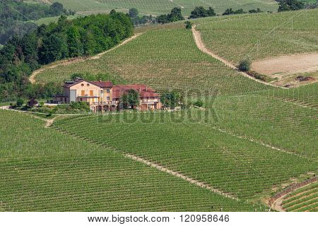 Rural house and green vineyards in Piedmont, Northern Italy.