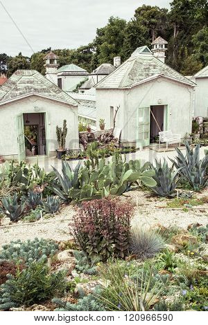 Garden With Various Cacti And Greenhouses
