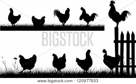 chicken, hen, rooster - silhouettes