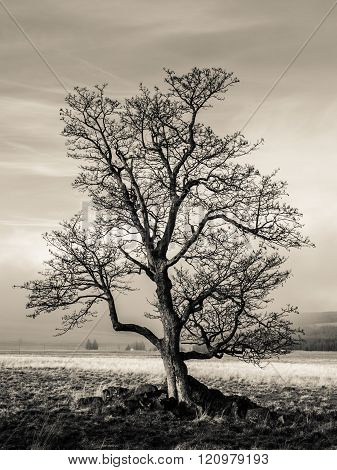 Lonely tree in autumn landscape