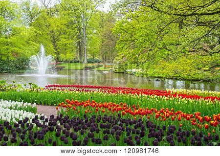 Beautiful spring flowers near pond in Keukenhof park in Netherlands (Holland)
