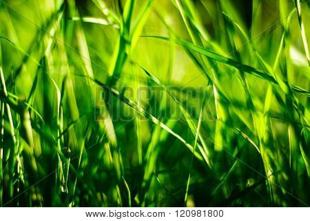Green Grass Close-up On A Sunny Day