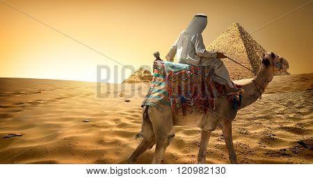 Bedouin on camel in desert