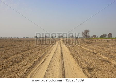 Dusty Abohar Landscape