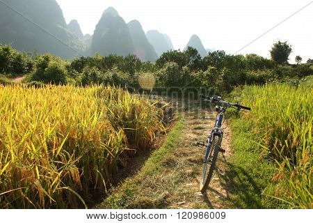 China country landscape with bicycle