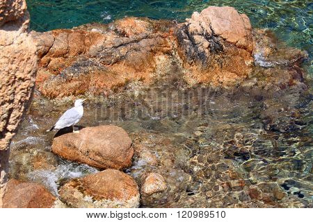 seagull over a stone in a beach in Gerona