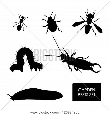 Set Of Garden Pests On A White Background. Silhouette Of Insects
