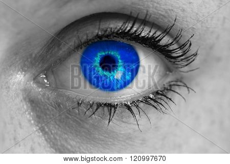 Eye With Blue Iris Looks At Viewer Concept Macro.