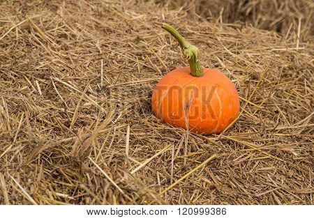 Pumpkin On The Straw.