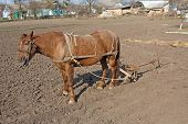 stock photo of horse plowing  - Horse with plow standing on the ground - JPG