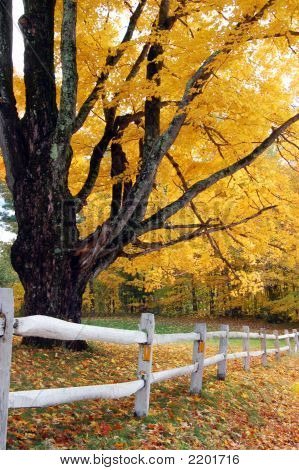 Autumn Foliage With White Fence